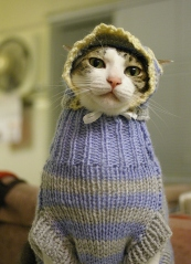 cat-wearing-sweater--large-msg-130592658314