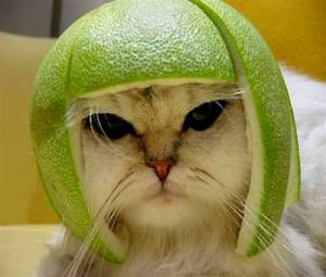 catLime